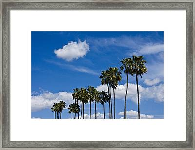 Palm Trees In San Diego California No. 1661 Framed Print by Randall Nyhof