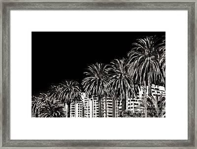 Palm Trees In Vina Del Mar Framed Print by John Rizzuto