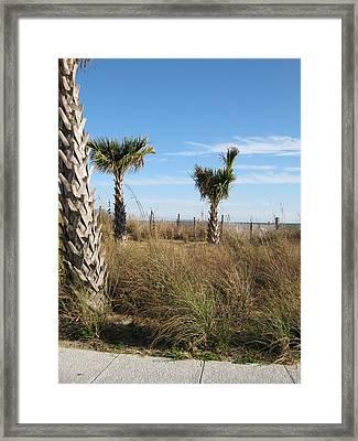 Palm Trees Framed Print by Sarah Manspile