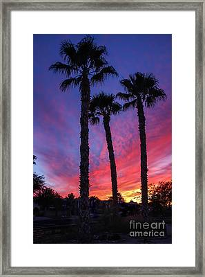 Palm Trees Sunset Framed Print by Robert Bales