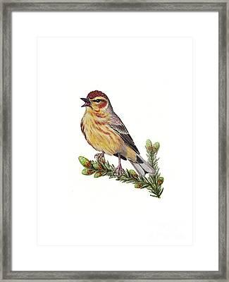 Palm Warbler Setophaga Palmarum Framed Print by Carlyn Iverson