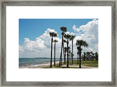 Palms Blowing Framed Print by Aimee L Maher Photography and Art Visit ALMGallerydotcom
