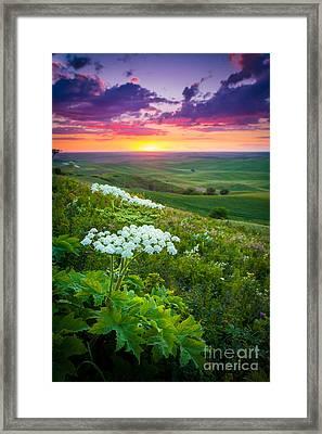 Palouse Flowers Framed Print by Inge Johnsson