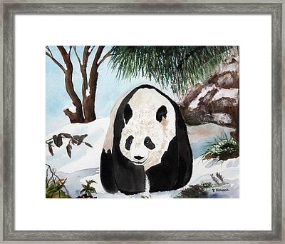 Panda On Ice Framed Print by Patricia Novack