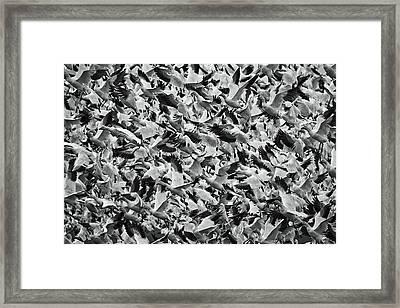Panic Framed Print by Mark Kiver