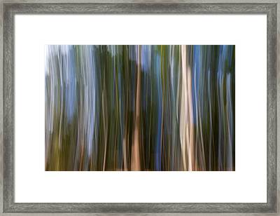 Panning Forest 3 Framed Print by Stelios Kleanthous