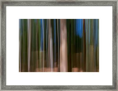 Panning Forest Framed Print by Stelios Kleanthous