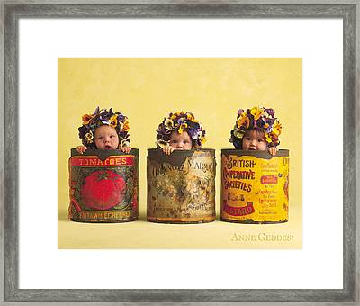Pansies Framed Print by Anne Geddes