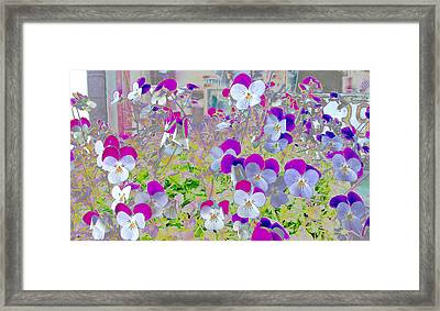 Pansies In Reverse Framed Print by Greg Reed