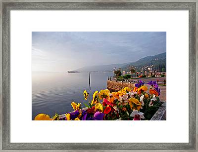 Pansies On Lake Maggiore Framed Print by Peter Tellone