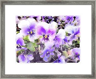 Pansies Watercolor Framed Print by John Edwards