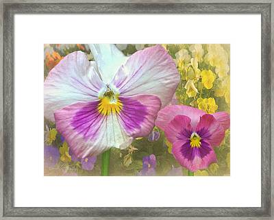 Pansy Duo Framed Print by Sandi OReilly