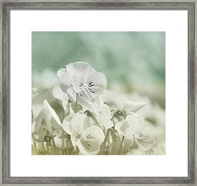Pansy Flowers Framed Print by Kim Hojnacki