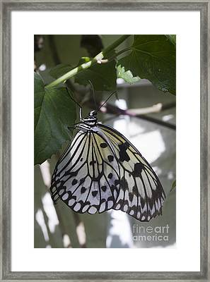 Paper Kite Framed Print by Anne Rodkin