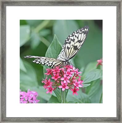 Paper Kite Butterfly - 2 Framed Print by Kim Hojnacki