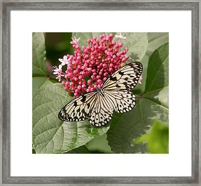 Paper Kite Butterfly Framed Print by Kim Hojnacki