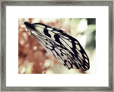 Paper Kite Butterfly Wings Framed Print by Marianna Mills