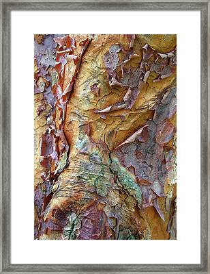 Paperbark Abstract Framed Print by Jessica Jenney