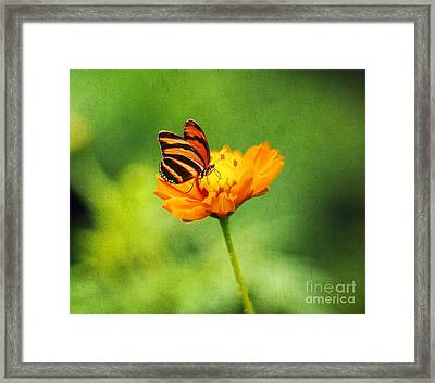 Papillon Framed Print by Darren Fisher