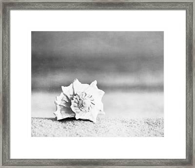 Paradise Framed Print by Carolyn Cochrane