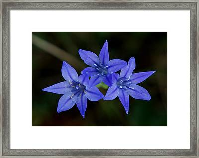 Paradise Lost Framed Print by Kim Pate