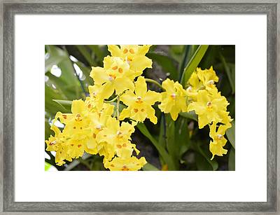 Paradise Orchid  Framed Print by Sonali Gangane