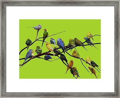 Parakeet Paradise Framed Print by DiDi Higginbotham