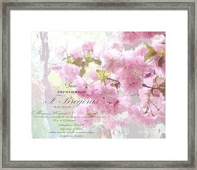 Paris Dreamy Pink Blossoms Tree - Paris Cherry Blossoms With French Script Letter Writing Framed Print by Kathy Fornal