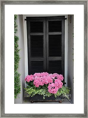 Paris Pink Hydrangeas Window Box - Paris Hydrangeas Window Box Art Framed Print by Kathy Fornal