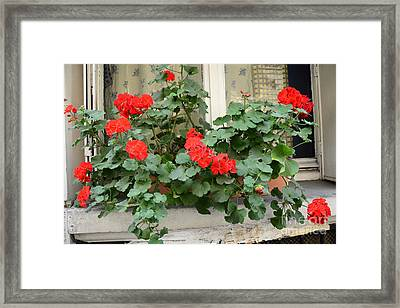 Paris Window Flower Box Geraniums - Paris Red Geraniums Window Flower Box Framed Print by Kathy Fornal