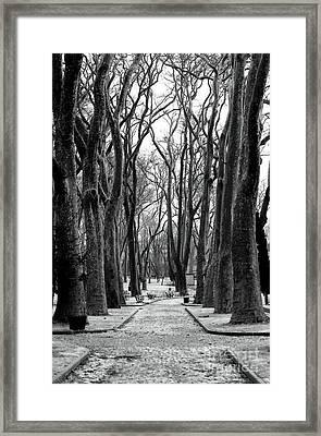 Park Path Framed Print by John Rizzuto