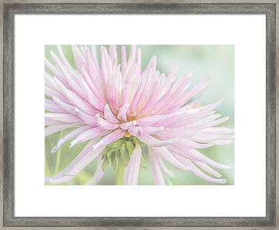 Park Princess Collarette Dahlia Framed Print by Julie Palencia