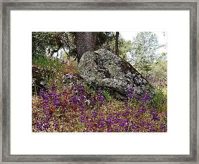 Park Sierra Springtime Landscape-ca Framed Print by Ruth Hager