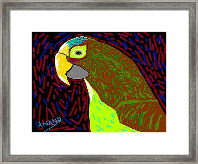 Parrot-3 Framed Print by Anand Swaroop Manchiraju