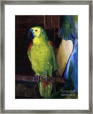 Parrot Framed Print by George Wesley Bellows