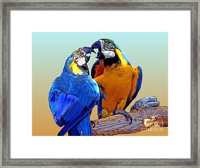 Parrot Passion 2 Framed Print by Linda  Parker