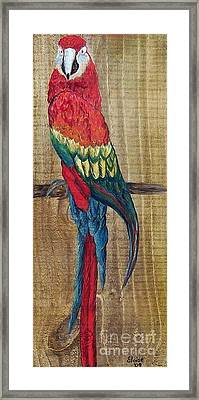 Parrot - Scarlet Macaw Framed Print by Eloise Schneider