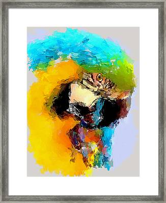 Parrot Thinking... Framed Print by Yury Malkov