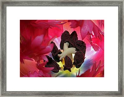 Parrot Tulip Swirl  Framed Print by Juergen Roth