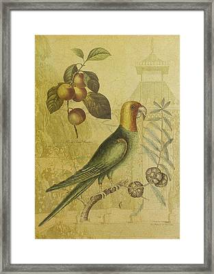 Parrot With Plums Framed Print by Sarah Vernon