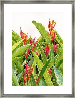 Parrot's Flower Heliconia Framed Print by Sharon Freeman