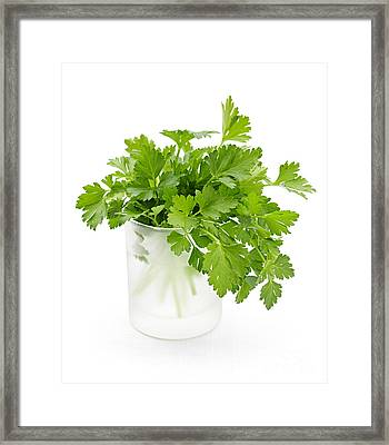 Parsley On White  Framed Print by Elena Elisseeva