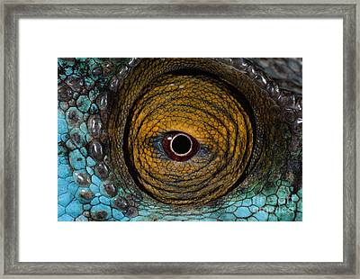 Parson's Chameleon Eye Framed Print by Martin Harvey