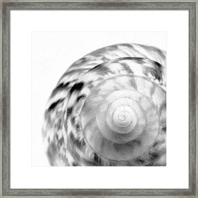 Part Of A Seashell Framed Print by Toppart Sweden