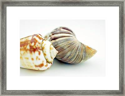 Part Of Sea Shell  Framed Print by Toppart Sweden