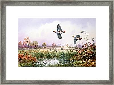 Partridge In Flight Framed Print by Carl Donner