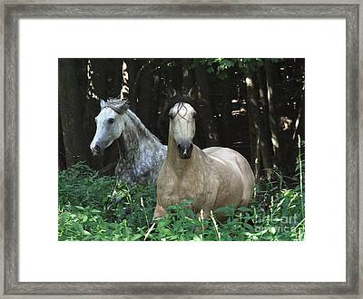 Paso Fino Mares Pay Attention Framed Print by Patricia Keller