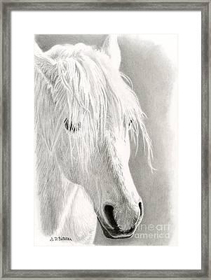 White Horse- Paso Fino Framed Print by Sarah Batalka