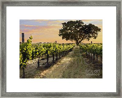 Paso Vineyard  Framed Print by Sharon Foster