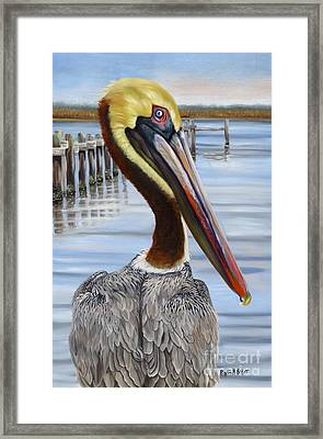 Pass Christian Pelican Framed Print by Phyllis Beiser
